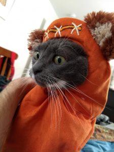 Cat in orange Wookie costume.